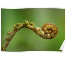 The Fiddlehead Poster