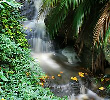 Mount Coot-Tha Waterfall by gmpepprell