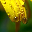 The most beautiful tears by Graeme M
