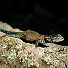 Yarrow's Spiny Lizard by Vicki Pelham