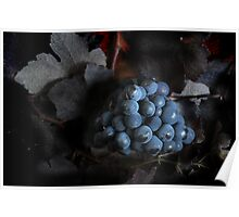 grape vine II Poster