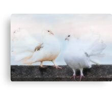 Dove Duo Canvas Print