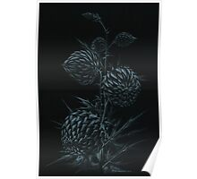 Spiny plant Poster
