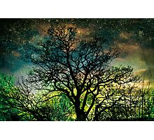 The Psychedelic Tree Photographic Print