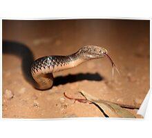 Snakey Poster