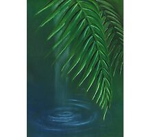 Palm leaves over water Photographic Print
