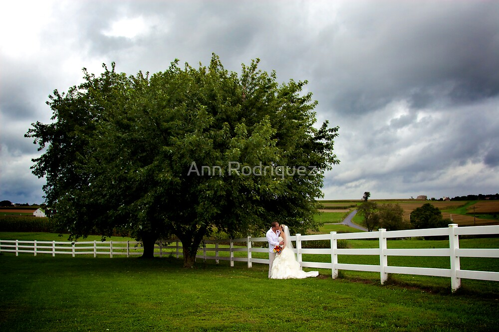 Picture Perfect Day by Ann Rodriquez
