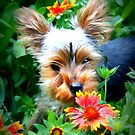 Bailey In The Flowers by jujubean