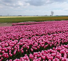Holland in Spring Seison. by Janone