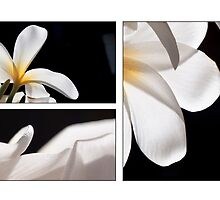 Trippin' on Plumeria by Kevin Bergen