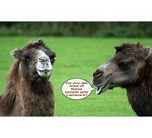 Camel Talk !!! Photographic Print