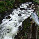 Salmon Leap by AnnDixon