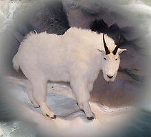 Mountain Goat by Jonice