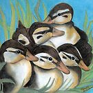 Baby Ducklings  by Marcella Babineaux