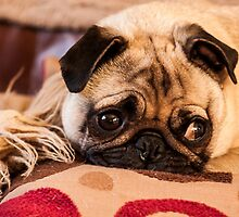 Honey the pug by chirs1990