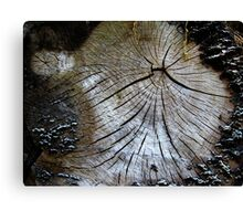 Old and weathered tree trunk  Canvas Print