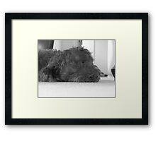 Max being lazy Framed Print