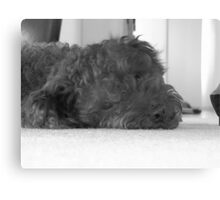 Max being lazy Canvas Print