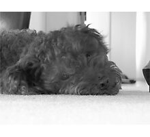 Max being lazy Photographic Print