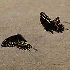 Dance of the Swallowtails by oldgoatsphoto