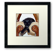 Relaxed Black Cat Sleeping Between Two Chairs Framed Print