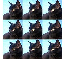 Black Cat- Warhol Style Photographic Print