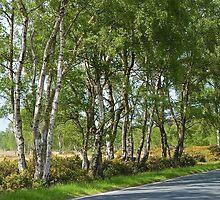 Along the roadside. by John (Mike)  Dobson
