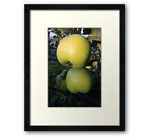 Alma (apple) Framed Print
