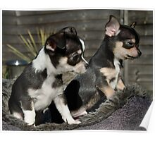 Chihuha Pups - Two of the Gang Poster