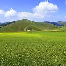 Yellow fields by annalisa bianchetti