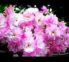 cherry blossom fantasy by cathyjacobs