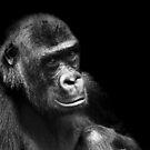 Gorilla.... by Stephie Butler