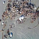 Seashore Leftovers by Brenda Dow