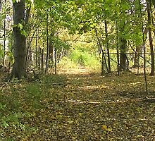 Sunny Forest Entrance by PopcornLadder