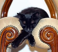 Relaxed Black Cat Sleeping Between Two Chairs by taiche