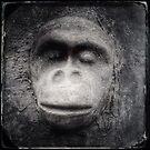 Monkey by Jean-François Dupuis