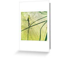Shadowfly Greeting Card