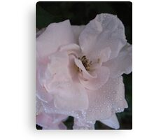 A slip of a Rose Canvas Print
