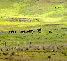 Lazy Cows with Green Grass on the Other Side by lowercase