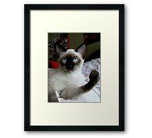 cat fist Framed Print