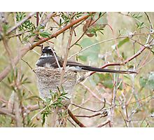 the nesting place Photographic Print