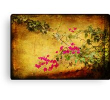 Golden wall with bougainvillea Canvas Print