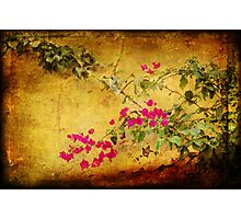 Golden wall with bougainvillea Photographic Print