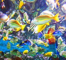 Colorful Tropical Fish by Guyzimijz