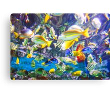 Colorful Tropical Fish Canvas Print