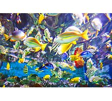 Colorful Tropical Fish Photographic Print