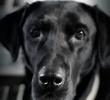 Black and Lab by 2DAH