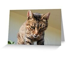 Tabby Cat Looking Down From A Height Greeting Card