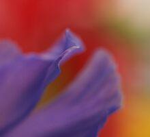 Iris by alistair mcbride