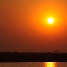 Sunset  - Chobe River by Steve Bullock